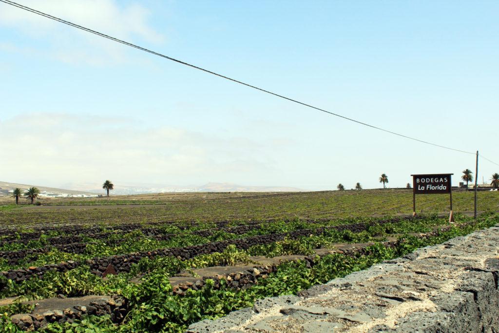 La Geria - Lanzarote cosa fare a lanzarote